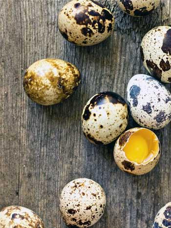 какое яйцо лучше для прикорма: куриное или перепелиное?