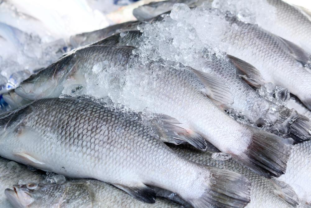 какая рыба походит для первого прикорма